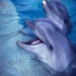 delfini roma tours