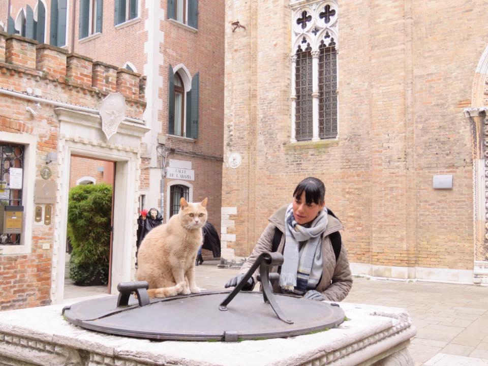 Кошки в Венеции - автомобильные туры по Италии