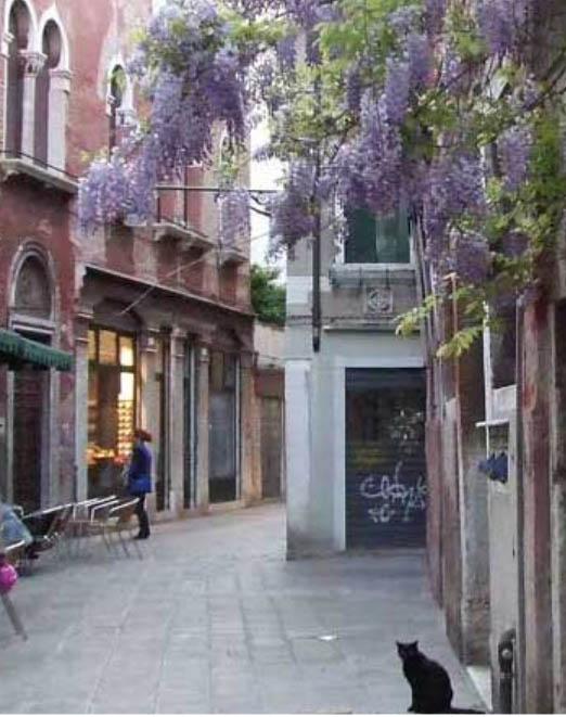 Visites guidées individuelles de Venise