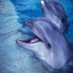 Делфини - Аквапарк - Рим